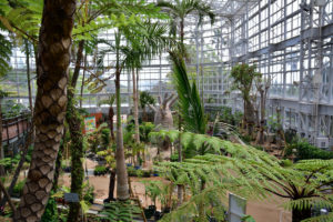 植物園 バオバブ