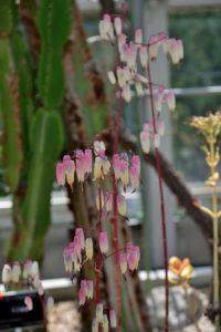 植物園 サボテン温室 多肉植物 花