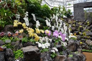 植物園 東南アジア 蘭