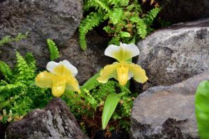 植物園 黄色 蘭
