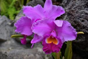 植物園 紫 蘭