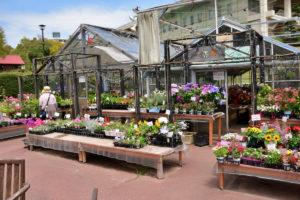 植物園 花の売店