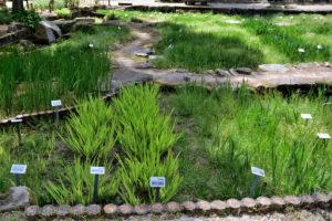 植物園 菖蒲園