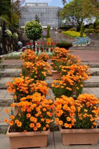 植物園 階段