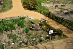 植物園 手水鉢 夏芭蕉 立て札