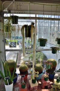 植物園 サボテン温室 キャットテイル