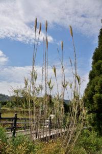 植物園 背の高い草