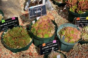 植物園 サボテン温室 多肉植物 三種