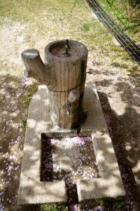 植物園 水飲み場
