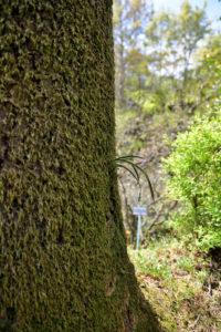 植物園 木に生えた苔 新芽