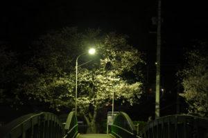 瀬野川の夜桜