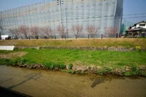 菜の花 三迫川 10mm