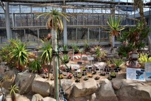 植物園 アロエ
