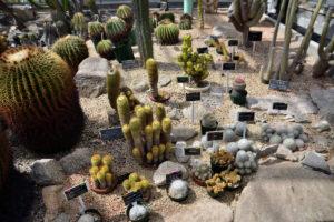 植物園 サボテン温室 前室