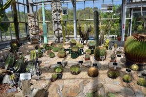 植物園 サボテン オブジェ