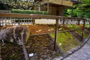 植物園 苔 展示