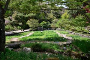 植物園 ハナショウブ園