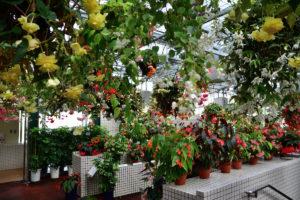 植物園 ベゴニア温室 入り口