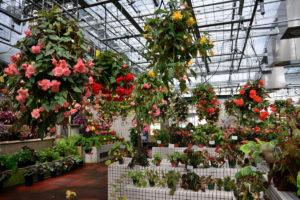 植物園 ベゴニア温室 中央付近