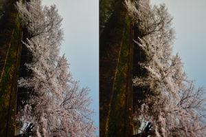 写真印刷 比較