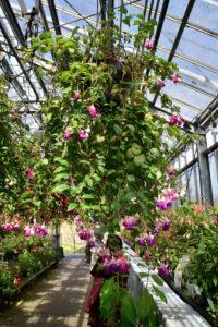 植物園 フクシア 温室 出口方向