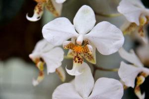 植物園 蘭