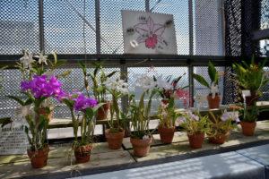 植物園 蘭 説明