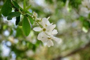 植物園 白い花